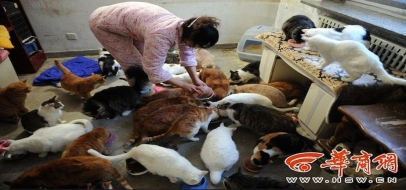 1 Chinese girl, 70 stray cats