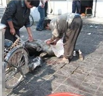 crudeltà sugli asini