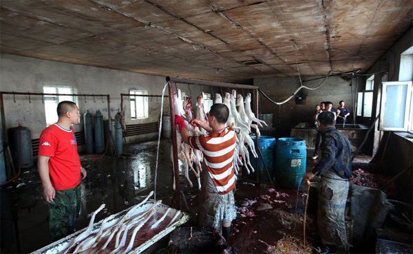 illegal dog slaughterhouse in China