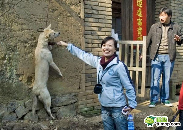 dog abuse in China