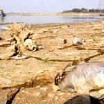 10 alarming photos of drought in China