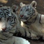 Animals of China