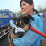 520 dogs intended for slaughter freed in China thanks to micro blogging