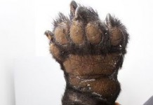bear paws seized in China