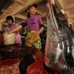 Wildlife Silent Hill: 20 pictures of Traditional Chinese Medicine animal markets