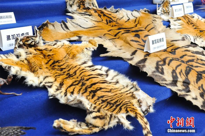 wildlife animal trafficking