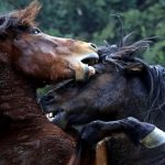 Horse fight club in Guangxi
