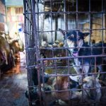 In Yulin a Dog Festival isn't exactly what you might think [Graphic Images]