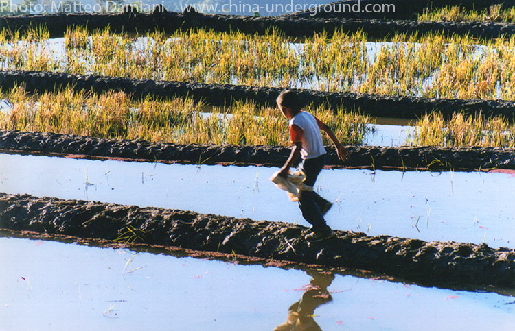 Kid running on a rice paddy field