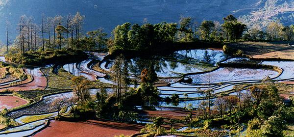 Yuanyang rice-paddy terracing
