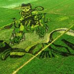 Rice paddy art in China