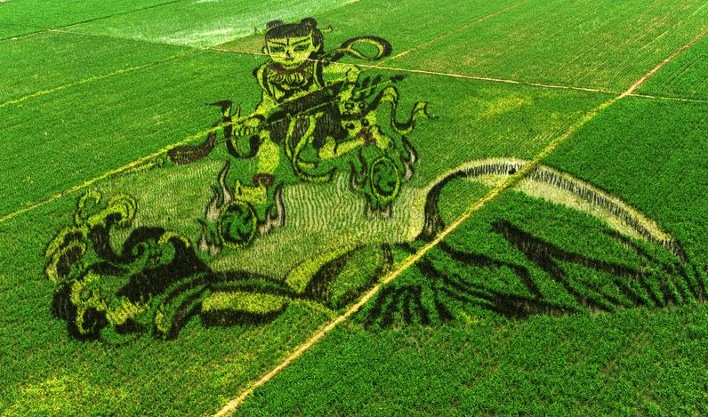 Rice-paddy-art-China