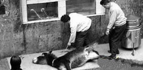 8 Animals Eaten Alive in China - Graphic Content - China
