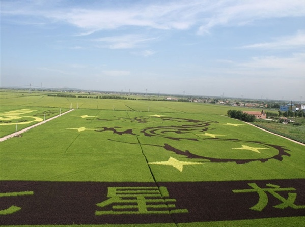 Rice paddy art in China