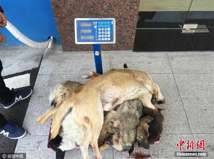 dogs-killer-002