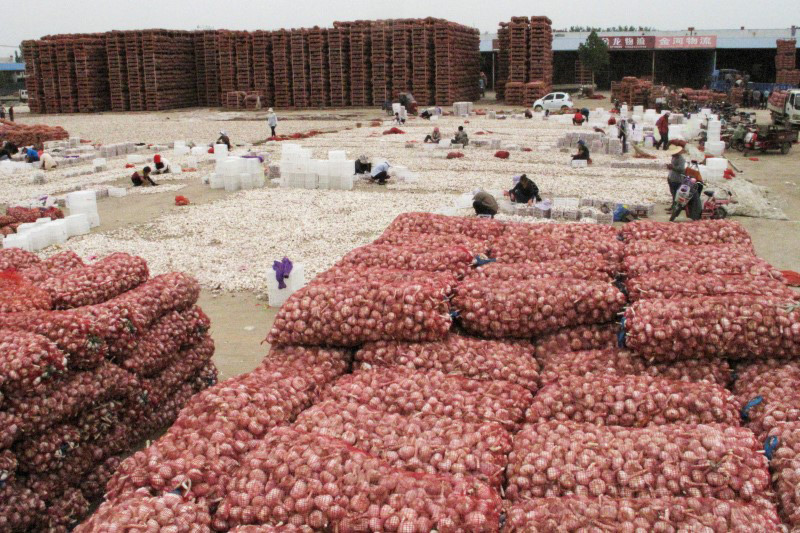 CHINA-AGRICULTURE-GARLIC-2