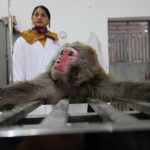 The research monkeys 'Made in China'