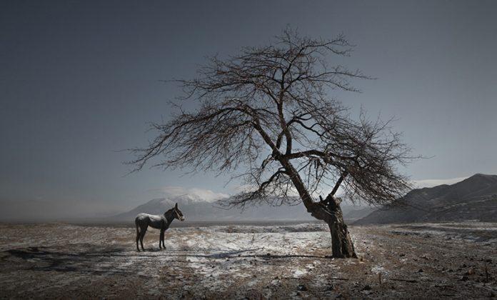 Maoyuan_Cui_china_Shortlist_Professional_Landscape_2016_4