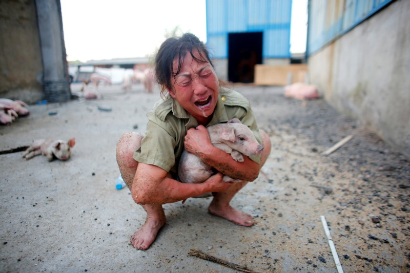 A woman cries as she holds a pig rescued from a flooded farm in Xiaogan