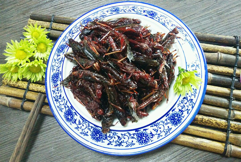 003fried-insects
