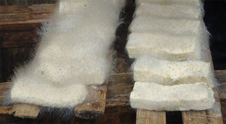 hairy-tofu-Polarizing Foods