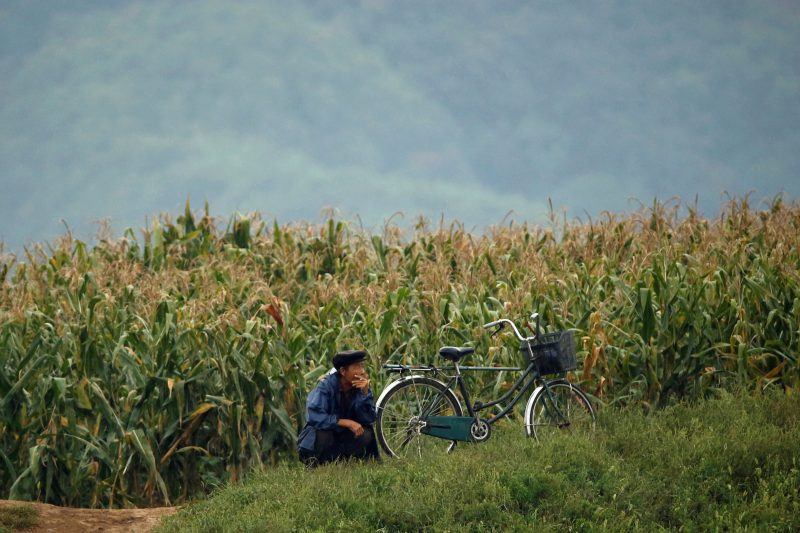 A man sits in front of a cornfield at the bank of the Yalu River, near the North Korean town of Sinuiju, opposite Dandong in China's Liaoning province, September 10, 2016. REUTERS/Thomas Peter