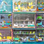 Trip to Jingxing Flowers and Birds Market