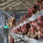 Hard to detect, China bird flu virus may be more widespread