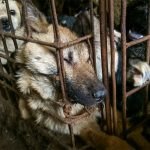 Dog meat banned at Yulin festival in China