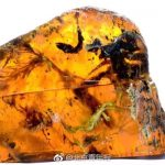 Ancient birds details revealed by the most complete nestling preserved in amber