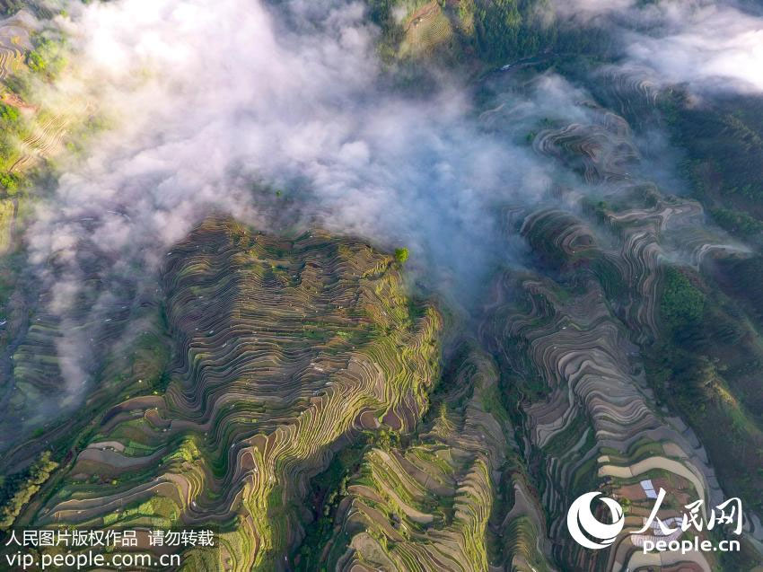Terrace-paddy-fields-in-Guizhou-province
