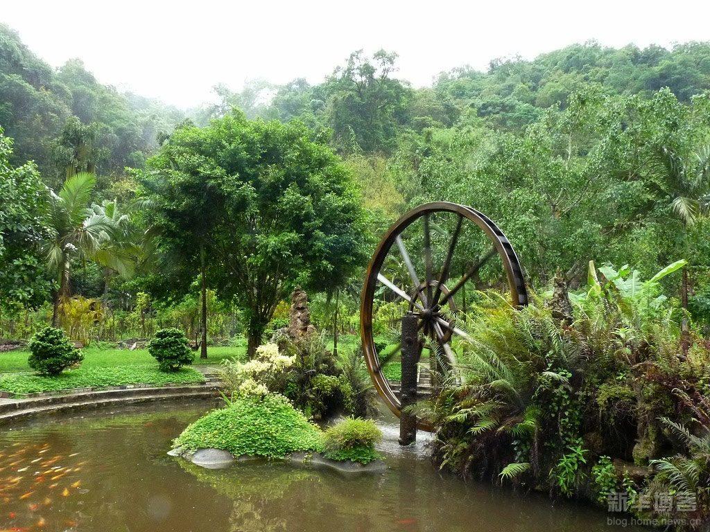 Moli-Tropical-Rainforest