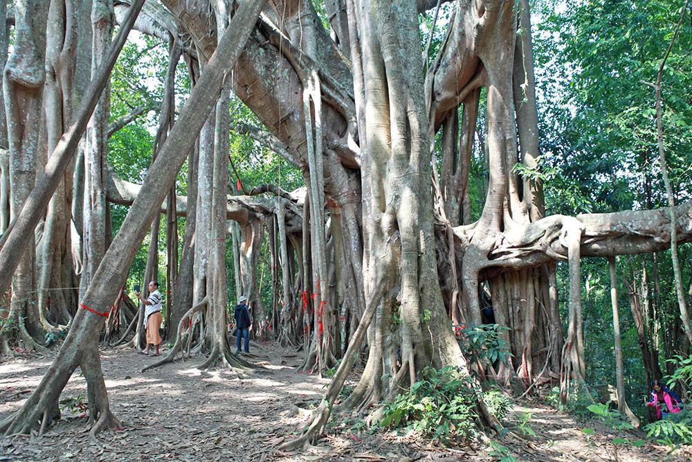 Tongbi Pass Nature Reserve