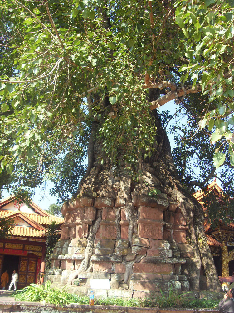 Tree-entwined Pagoda-yunnan-china