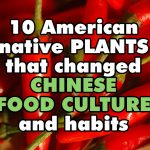 10 American native plants that changed Chinese food culture and habits