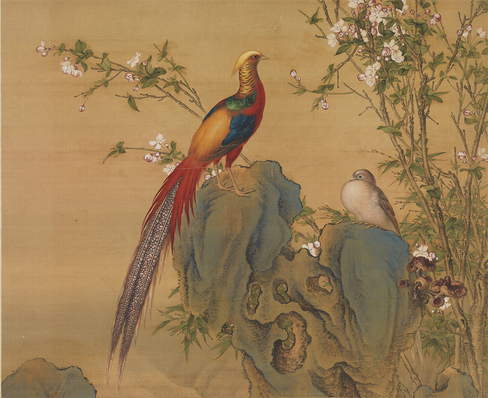 Golden Pheasants in Spring