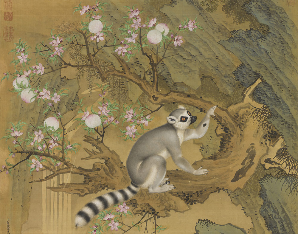 Cochin Lemur