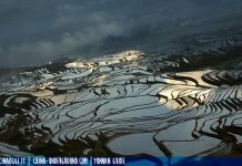 jiayin terraced fields