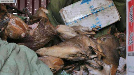China-cracked-down-largest-Wildlife-trafficking-to-date