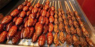 cicada-snack