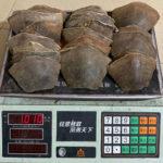 Trafficking of Pangolin Scales