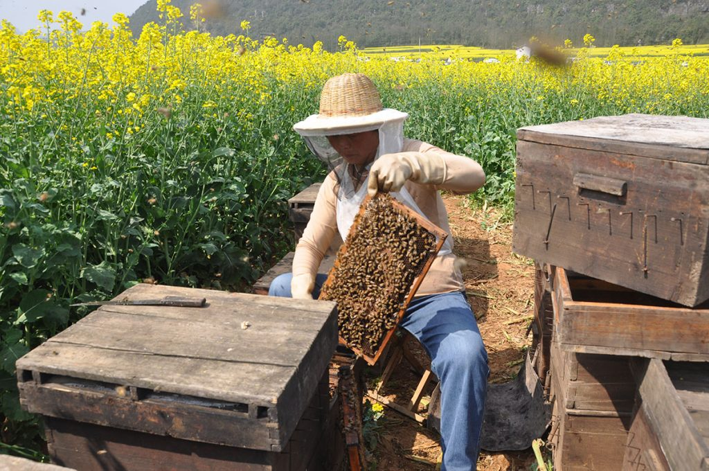 bees beekeaper yunnan china